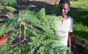 If Plants Could be Superheroes, Moringa Would Qualify