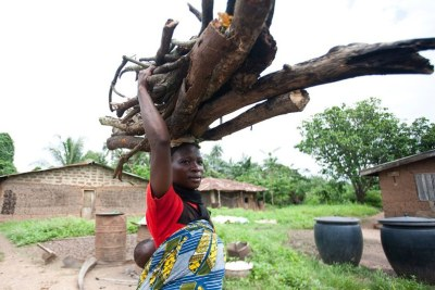 A farmer carries firewood (file photo): Up to 90 percent of Zimbabweans now rely on firewood for cooking, a huge leap from around 50 percent two decades ago, according to non-governmental organisation Environment Africa.