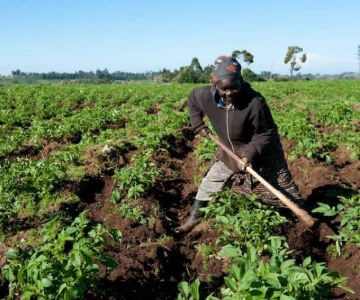Secure Land Rights: Food Security Depends On It