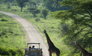 Serengeti Tops Best Safari Parks in Africa List