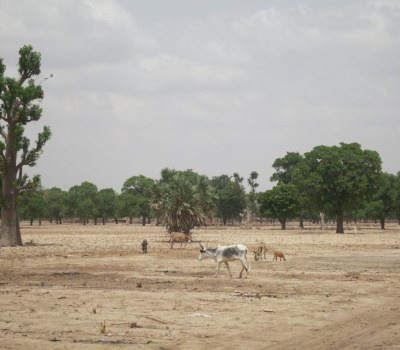 Farmers Prepare for a Climate-Insecure Future in Mali