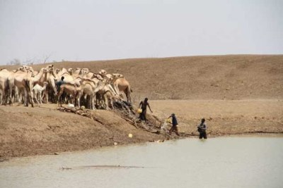 Herders collect water with camels at one of the few remaining water points in drought-affected Bandarero village, Moyale County, Kenya.
