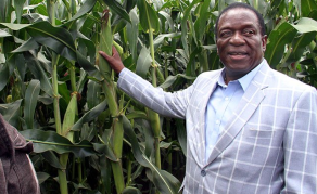 Land-Grabbing Zimbabwean Cleric Defies Directive to Vacate Farm