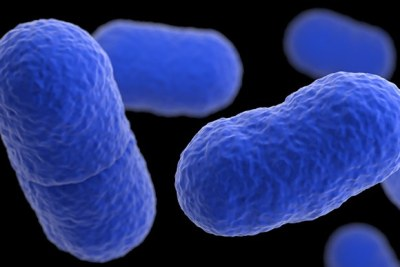 Microscopic view of Listeriosis bacteria.