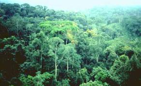 Un puits de carbone découvert au Congo-Brazzaville