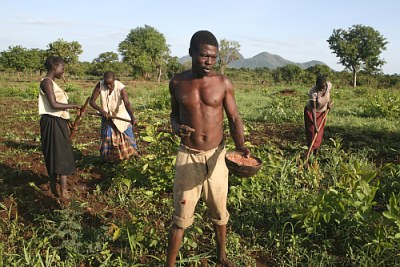 Uganda: Preparing land for cultivation.