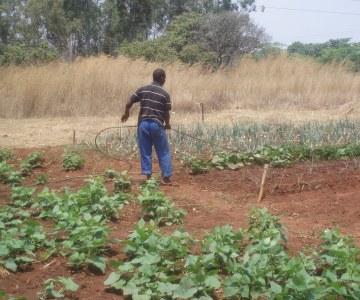 Urban Gardening in Zimbabwe