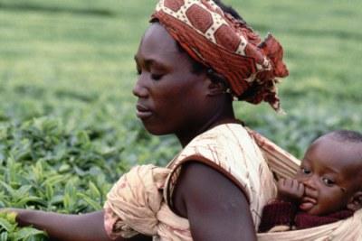 Tea pickers, Murang'a, Kenya, 1991