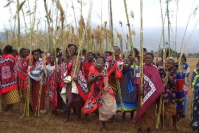 Danse annuelle des Roseaux au Swaziland où de jeunes femmes se réunissent à travers le pays pour rendre hommage à la reine à la mère - comme exemple