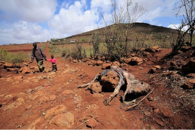 A livestock carcass in Marsabit, in Northern Kenya, which has suffered prolonged drought.