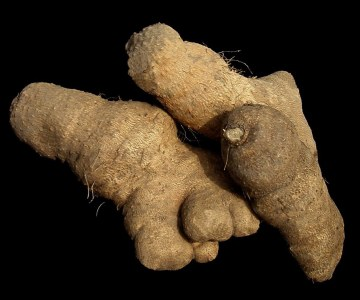 West Africa: Boosting Yam Production
