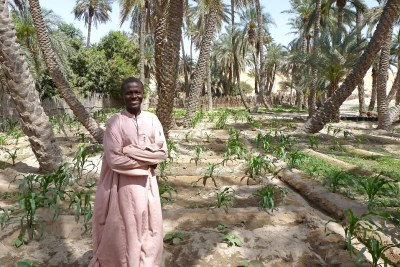 Les régions du Kanem et de Bahr el Ghazal, dans l'ouest du Tchad sont parsemées d'oasis fertiles, appelées oueds.