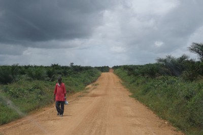 A road near Boegbor, a town in District Four of Grand Bassa County, Liberia has been leased by the government to Equatorial Palm Oil for 50 years (file photo).