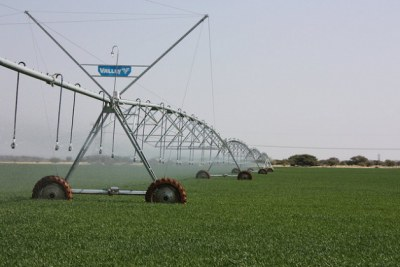 Irrigating a farm.