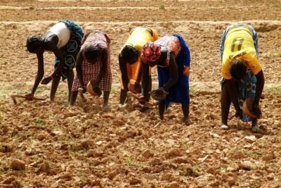Des agricultrices sèment des graines de millet à Rassomde, au Burkina Faso, en prévision de la saison des pluies.