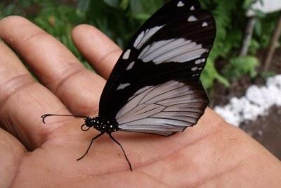 Centre de recherche sur les papillons à Zanzibar.