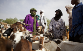 Malian Pastoralists Turn to Satellites in Search for Water