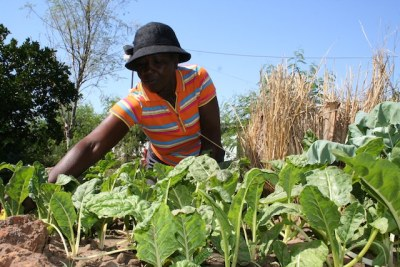 Women from Zimbabwe's Lupane District invest the profits of their craft sales in 'keyhole' gardens to ensure food security.