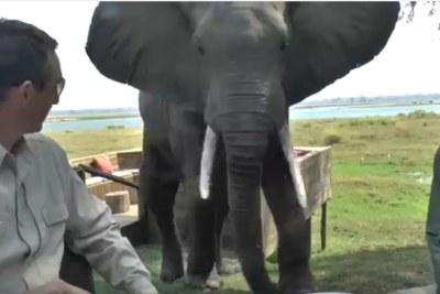 Un éléphant dans un site touristique au Zimbabwe, à Mana Pools.