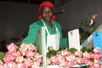 Kenya exports flowers all over the world (file photo).