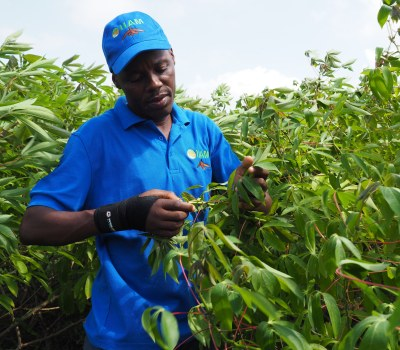 Empowering Mozambican Farmers with Improved Seeds