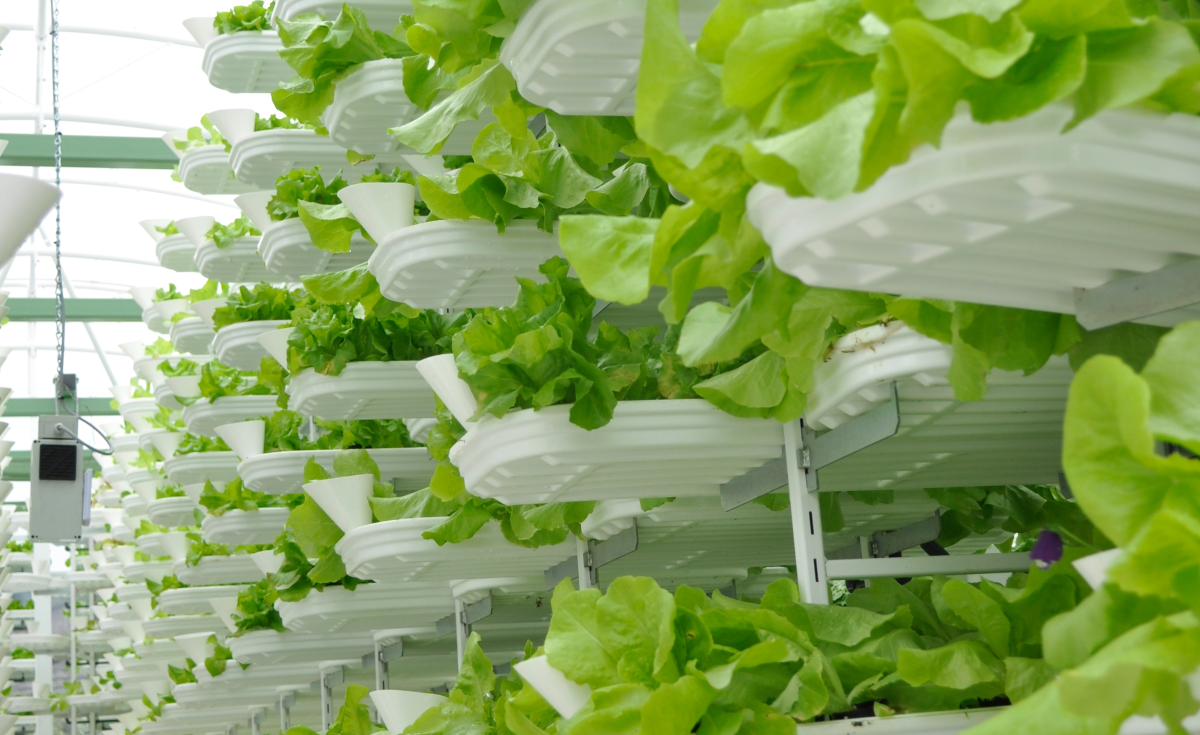 Africa Needs Own Version of the Vertical Farm to Feed Growing Cities