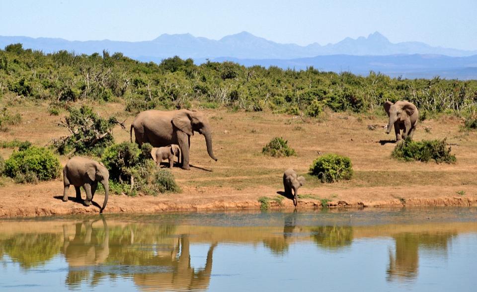 Africa: Zimbabwe Among Top Eight Safari Destinations in Africa
