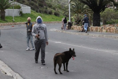 A man stands with a petrol bomb, while a dog watches patrol proceedings.
