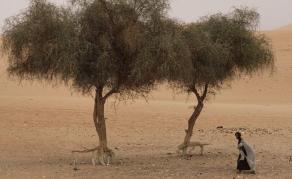 La sécheresse fait des morts à l'Est de la Mauritanie