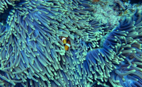 Journée mondiale de la vie sauvage - Sauvegarder les océans