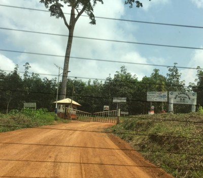 Rubber Plantation Destroying the LiveliHood of Cameroon Communities