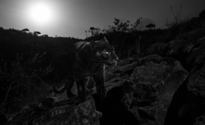 UK Photographer Captures Elusive Black Leopard in Kenya