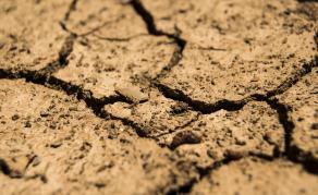 Govt Frees Millions of Dollars for Namibia's Devastating Drought