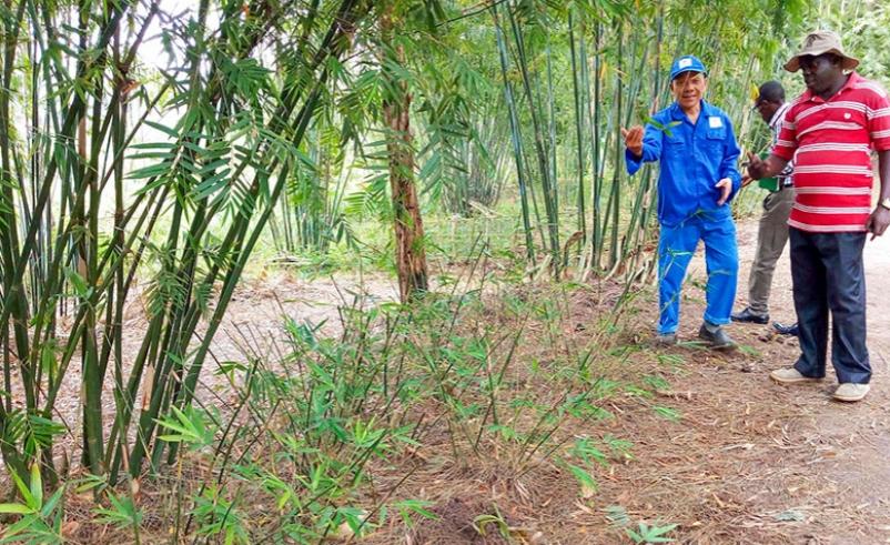 Rwanda Turns to Bamboo for Packaging Material