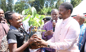China Avocado Deal Gets Reviewed in Kenya's Favour