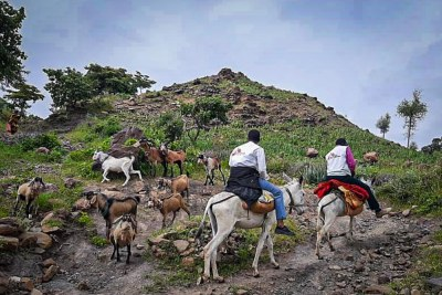 The MSF team rides by donkeys from Rokero town to Umo, a four-hour ride.