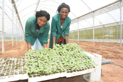 """We are excited to see how our Young Africa Works partnership with IITA will make the agricultural sector more attractive to young people, particularly women by providing skills training in the agriculture value chain for employment and entrepreneurship opportunities"